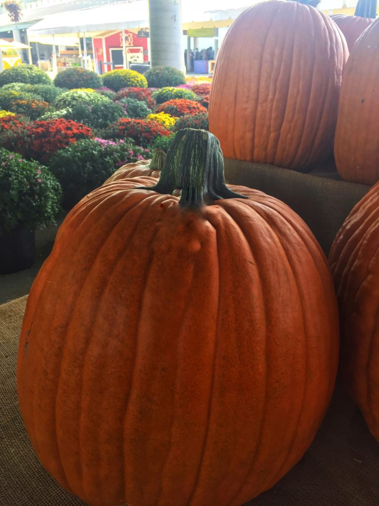Pumpkins and flowers at farmer's market Nashville