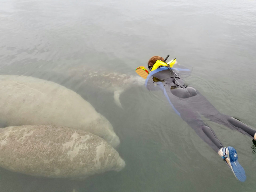Swimming with Manatees, Tami's Trippin