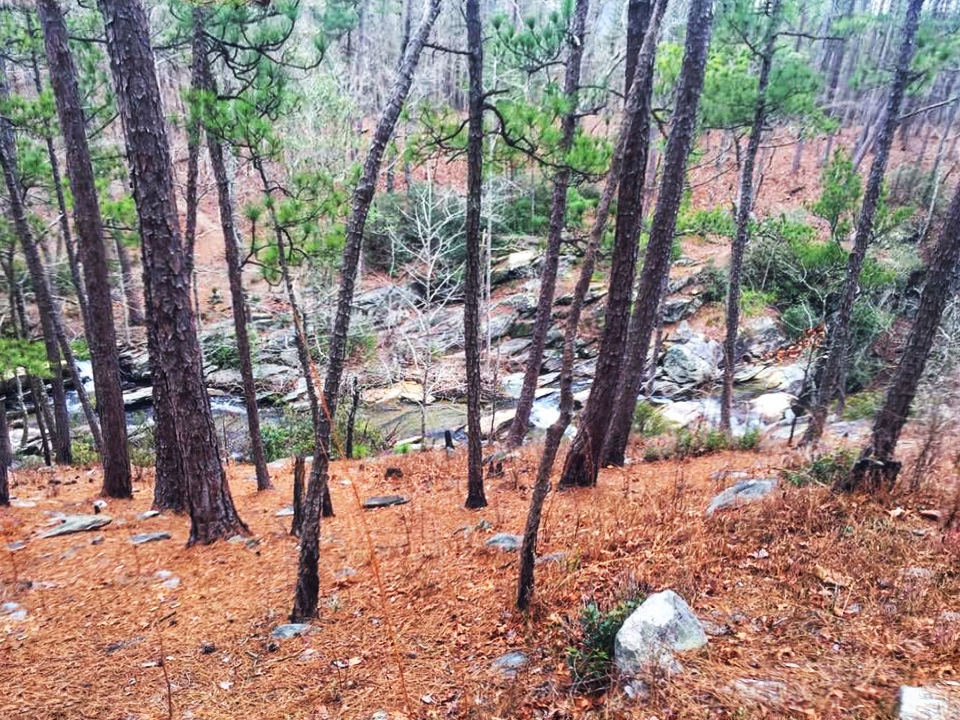 View of descent towards Cheaha Creek on Chinnabee Silent Trail