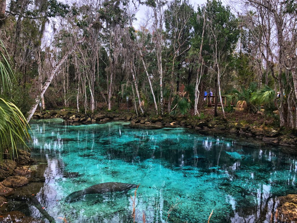 Three Sister's Springs, Crystal River Florida
