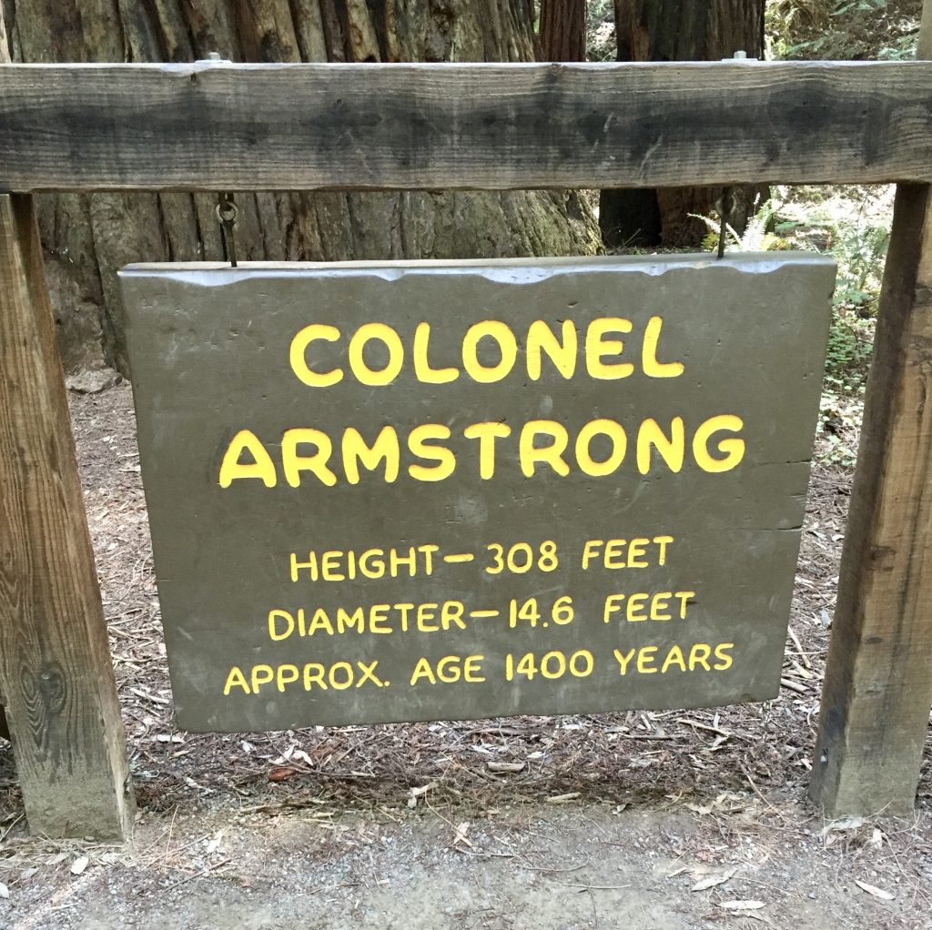 Armstron Redwoods, 52 Weeks 52 Hikes