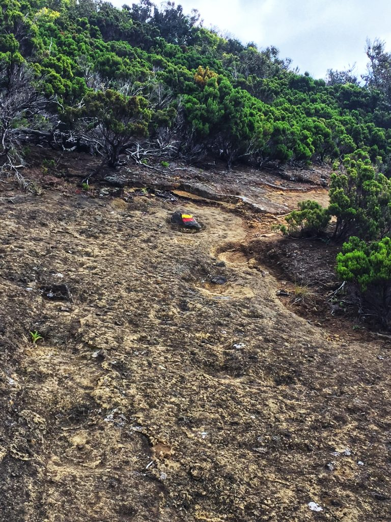 Trail Mount Brasil, Terceira Island, Azores